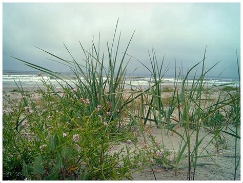 Ostseegras Nach Regen Foto & Bild