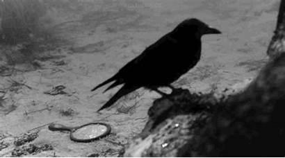 Ravens Enchantment Raven