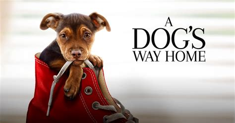 sensory friendly film  dogs  home autism society