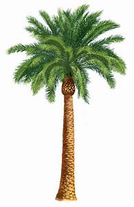 Palm Trees Clip Art Units 5 + 6 Clipart - The Gospel