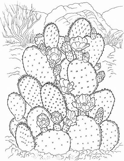 Cactus Coloring Pages Printable Adult Sheets Plants