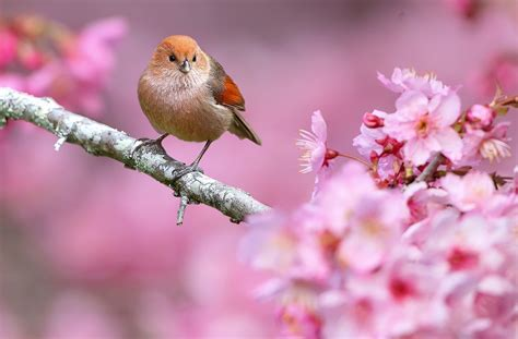 Pink Animal Wallpaper - animals nature birds flowers depth of field pink