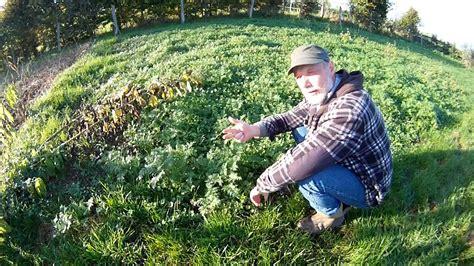 Garten Im Herbst Umgraben Oder Fräsen by Buchweizen Die Gruenduengung Im Herbst