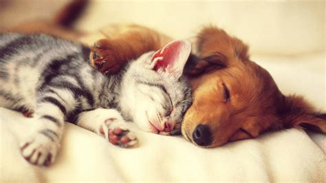 Happy Wallpaper Cats And Dogs by Free And Cat Wallpapers Photo 171 Wallpapers
