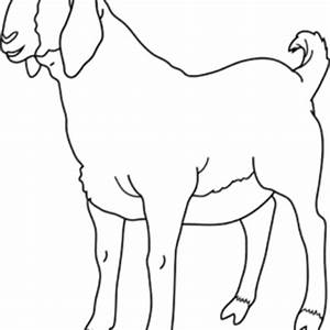 Goat Outline Clipart Clipart Kid Boer Goat Coloring Page ...