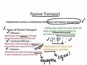 32 Active And Passive Transport Venn Diagram