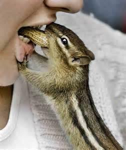 Little Cute Squirrel