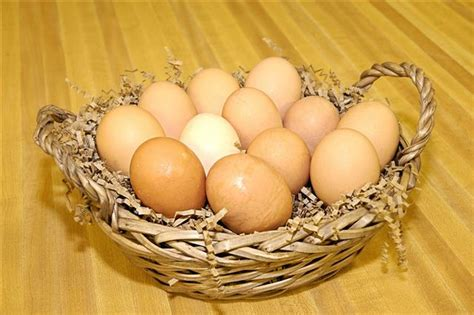 shelf of eggs a detailed summary about the shelf of eggs