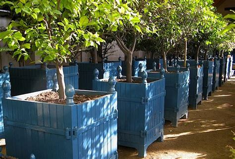 incredible design  wood planter boxes  big plants