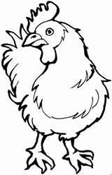 Hahn Colorare Chook Gallina Disegno Chicken Curiosa Template Tiere Kopf Dreht Den Disegni Malvorlage Ausmalbilder Gratis Coloring Malvorlagen sketch template