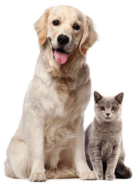 Mutuelle animaux domestiques ⋆ PRENDRE SOIN DE VOS ANIMAUX