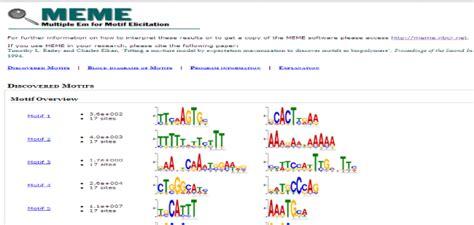Meme Motif Search - meme motif search 28 images meme motif search 100