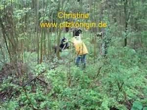 Was Sind Morcheln : morcheln und tr ffeln suchen und finden youtube ~ Watch28wear.com Haus und Dekorationen