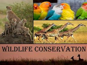 Conservation of wildlife essay custom research papers review