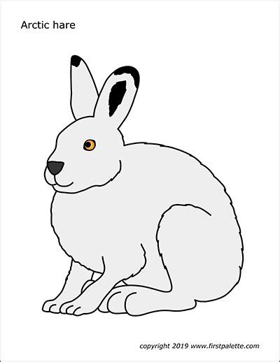 hare  printable templates coloring pages