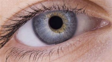 cure for blindness a cure for blindness stem cell advance boosts prospects