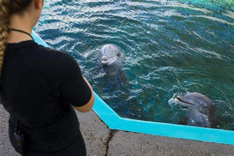 Dolphin Trainers At Texas State Aquarium Dedicated To Job