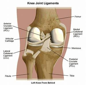 Behind Knee Joint Pain Diagnosis – Relief Symptoms by ...