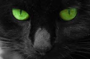 black cats with green beautiful cats black cat