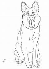 Shepherd German Coloring Pages Outline sketch template