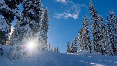 Winter Snow Forest Background Trees Elevation 4k