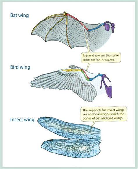 Evolution Biology 11 E Portfolio