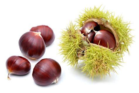 comment cuisiner des marrons en boite comment décortiquer facilement les châtaignes et marrons