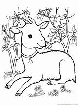 Goat Coloring Pages Printable Animals Coloringpages101 Getcolorings sketch template