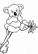 Koala Pages Coloring Animal Printable Sheets Colouring Koalas Sheet Activity Australia Bear Cliparts Cartoon Clipart Printables Para Books Dibujos Outline sketch template