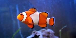 Aquaristik Tipps Fr Fische In Meerwasser