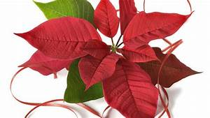 Enzian Schneiden Und überwintern : gartenpflanzen beliebte arten sowie tipps zur pflege und ~ Lizthompson.info Haus und Dekorationen