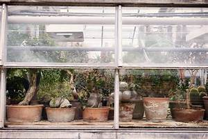Gewächshaus In Der Wohnung : kakteen berwintern so geht 39 s im gew chshaus ~ Markanthonyermac.com Haus und Dekorationen