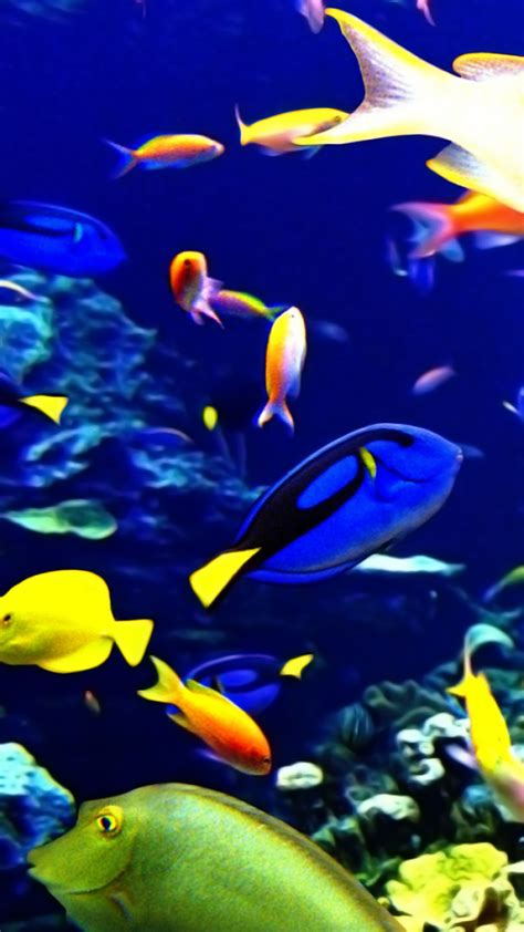 tropical fish backgrounds wallpapertag