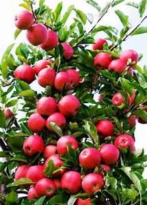 Tuer Un Arbre Avec De L Acide : comment booster la production de mon arbre fruitier ~ Dailycaller-alerts.com Idées de Décoration