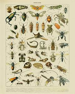 Vintage Insect Print French Insect Chart Biology Poster