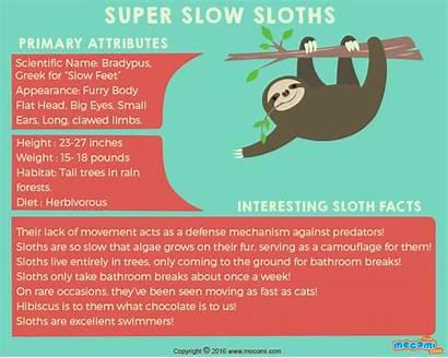 Sloth Facts Sloths Mocomi Rainforest Fun Poems