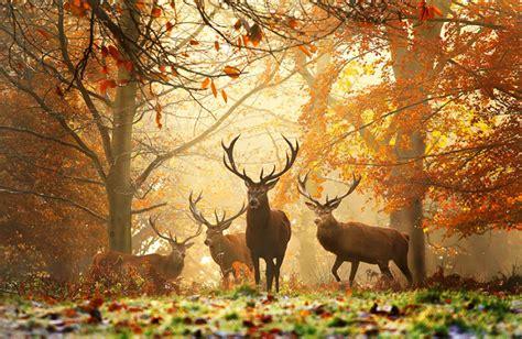 magnifiques paysages dautomne joli joli design