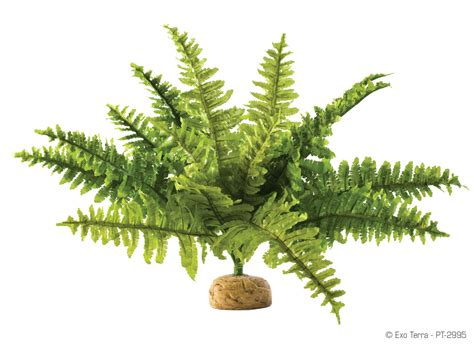 decorative ferns artificial fern decoration 4247451 1772x1295 all for desktop