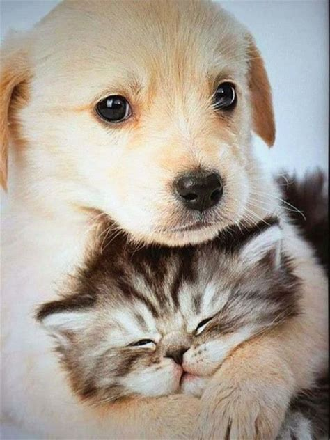 pin  lavelle hatton  cute animals cute cats  dogs