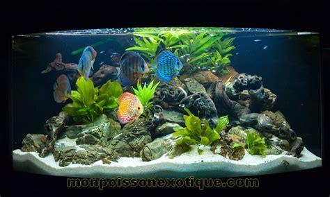 exemples d aquariums monpoissonexotique monpoissonexotique aquariophilie poissons