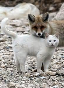 Fox and Cat Best Friends