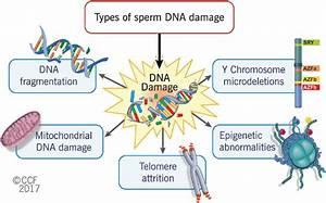 Types Of Sperm Dna Damage