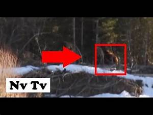 BigFoot 2017 - CRAZY!! REAL SASQUATCH SIGHTING!! MUST ...