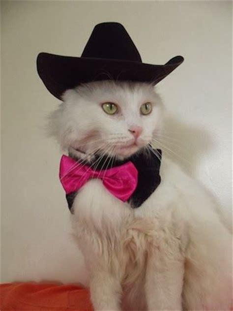 Welcome to the official cats and cowboy hats twitter! 19 best Cats in Cowboy Hats images on Pinterest | Cowboy ...