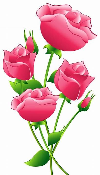 Roses Clip Transparent Pink Clipartix