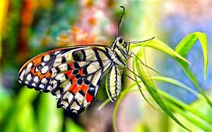 Lovely & Beautiful Birds Butterfly HD Wallpapers Photos ...