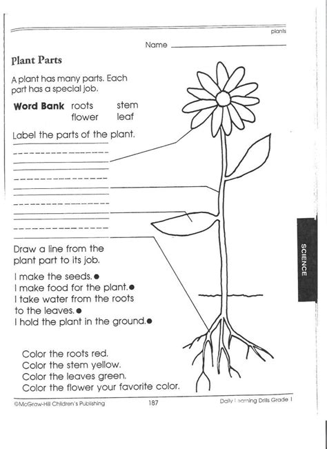 Science Worksheets For Class 7 Nutrition In Plants