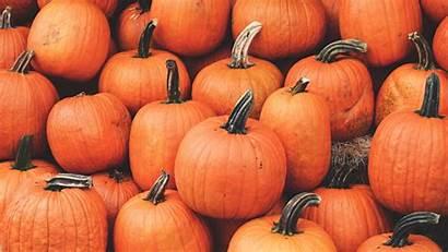 Pumpkin Autumn Harvest October Widescreen Ripe