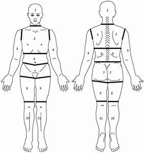 Diagram Of Body Segmented Into Regions For Assessment Of