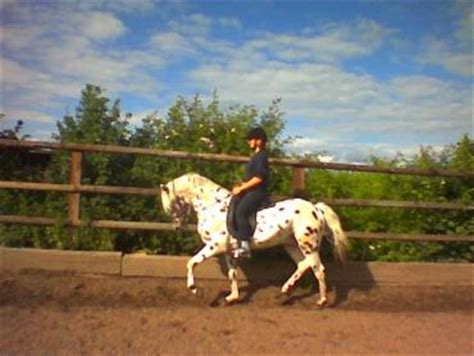 reitstunden horselands reitstall petith